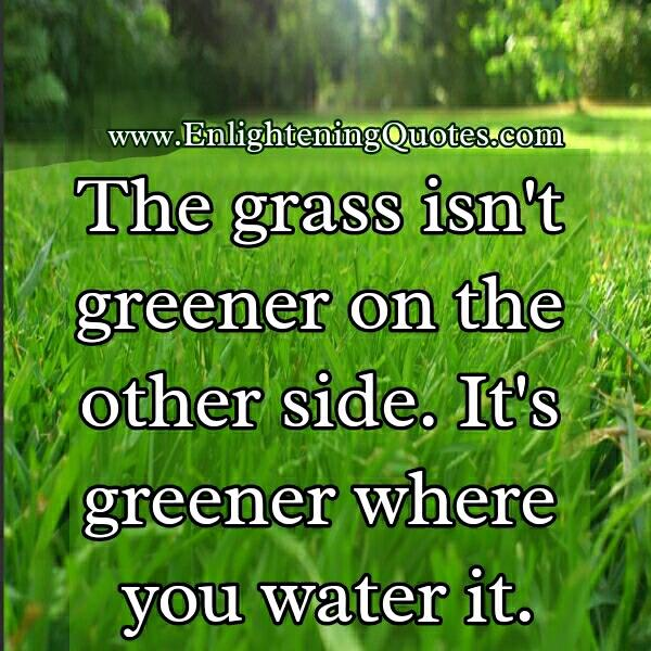 Essay on the grass is always greener on other side